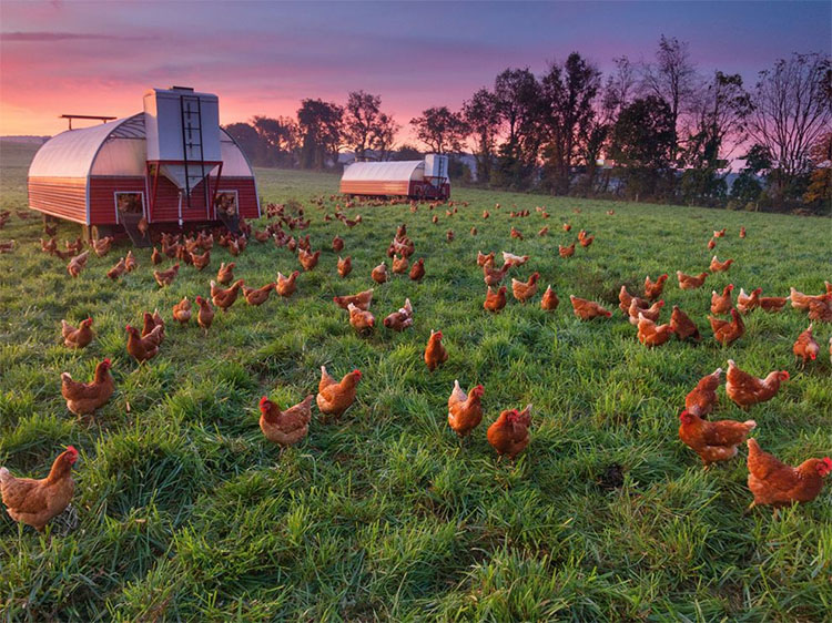 Recommendations for beginner poultry farmers
